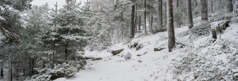 Paseo con raquetas de nieve por la Sierra de Guadarrama