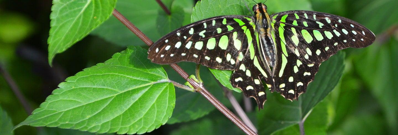 Biglietti per il giardino delle farfalle di Níjar
