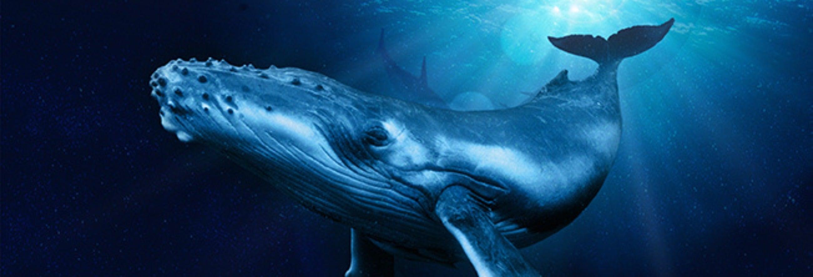 Entrada a Palma Aquarium