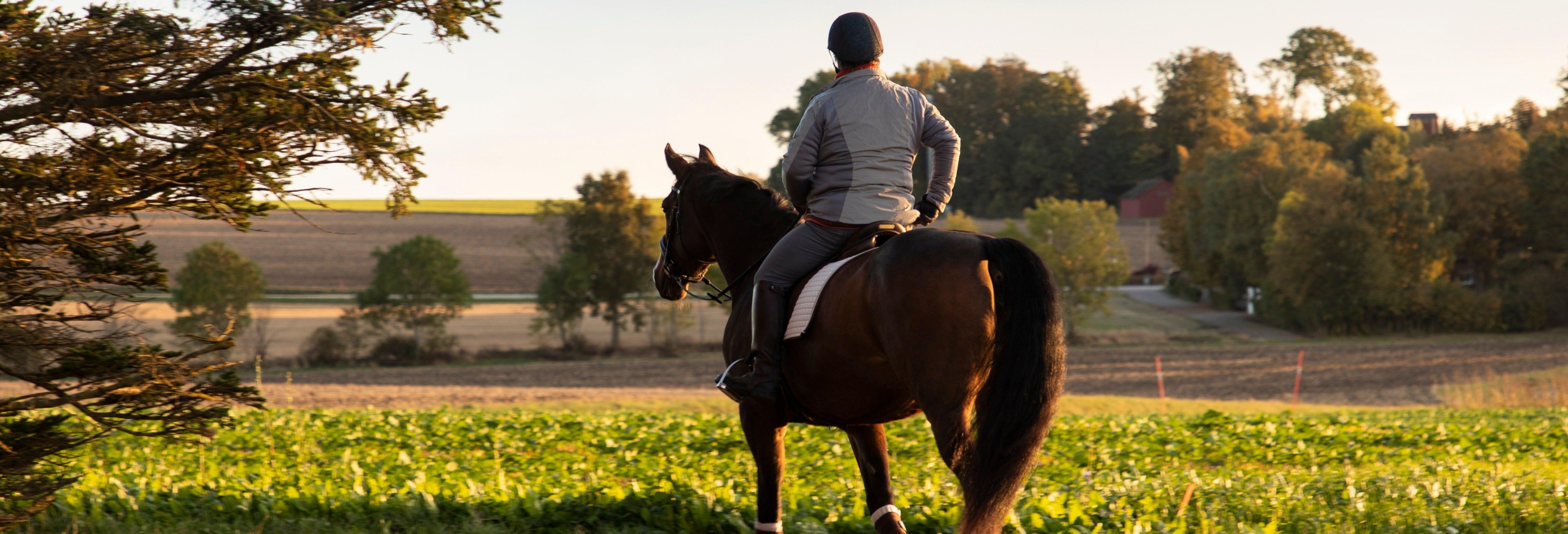 Paseo a caballo por Randa