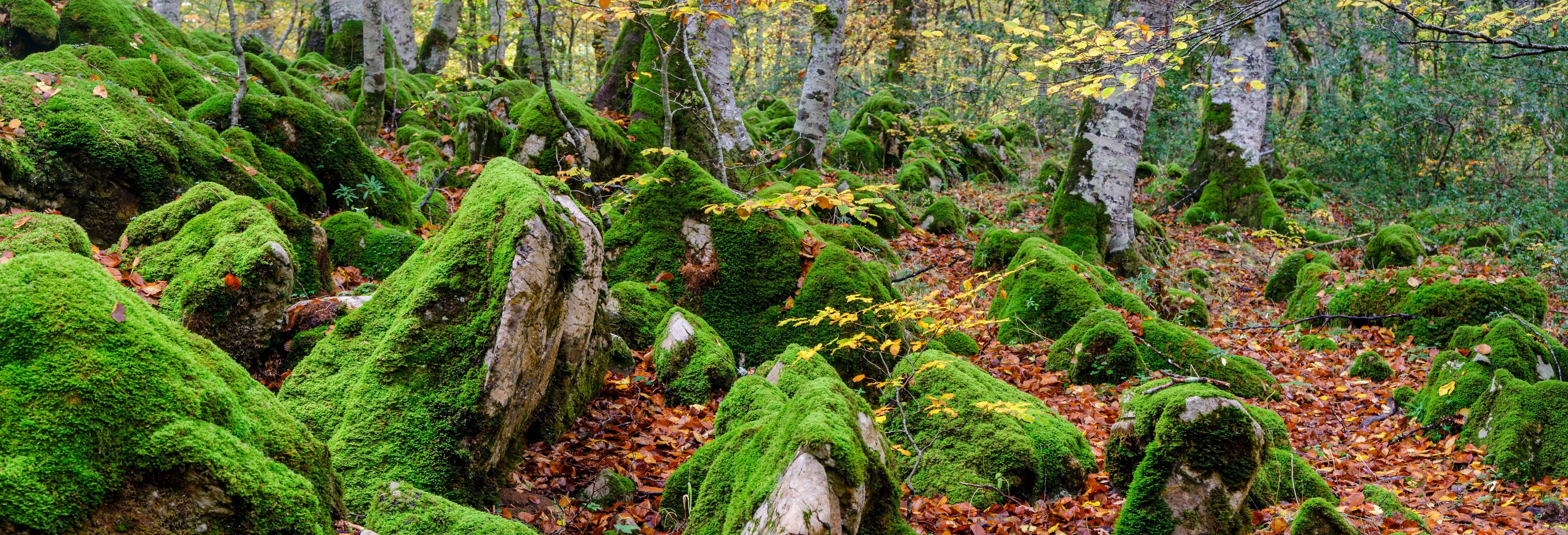 Excursión a la Selva de Irati