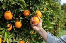 Tour de la naranja por la Masía dels Doblons