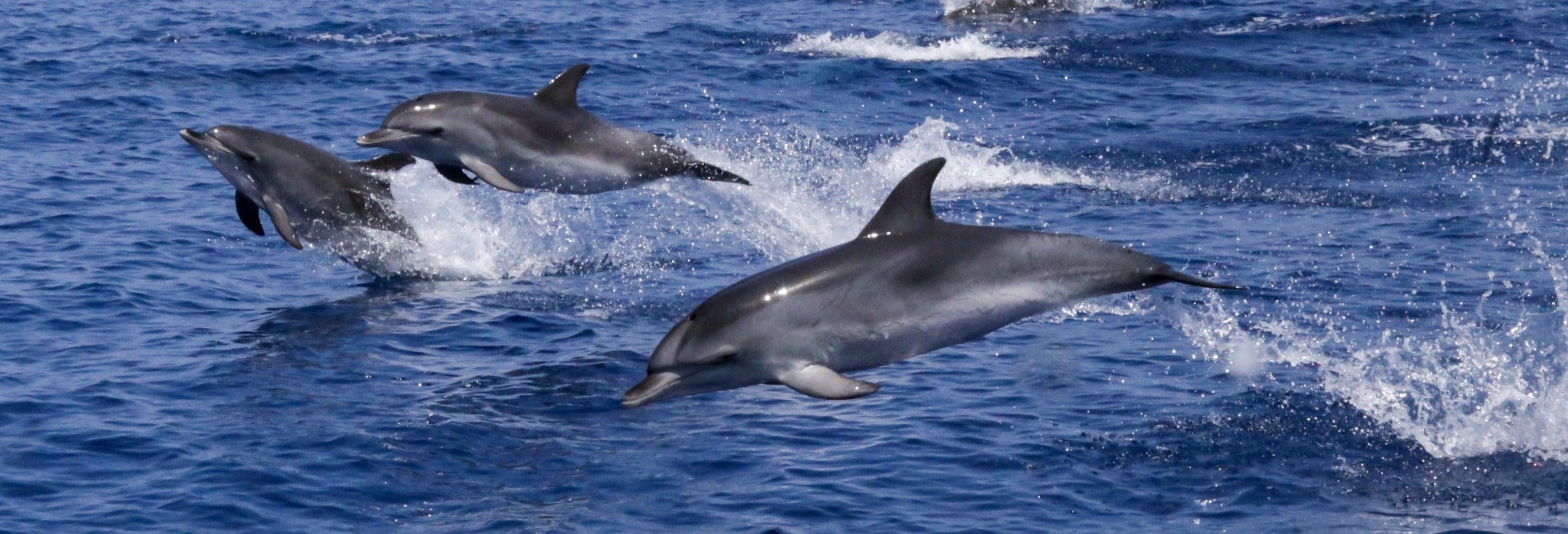 Avistamiento de delfines + Snorkel desde Puerto del Carmen