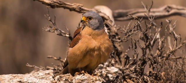 Avistamiento de aves + Degustación de vinos