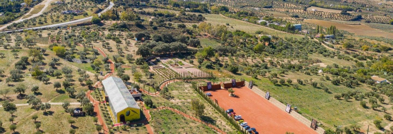 Visita all'azienda agricola LA Organic con degustazione di olio d'oliva