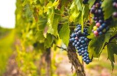 Excursión a Siurana con cata de vinos