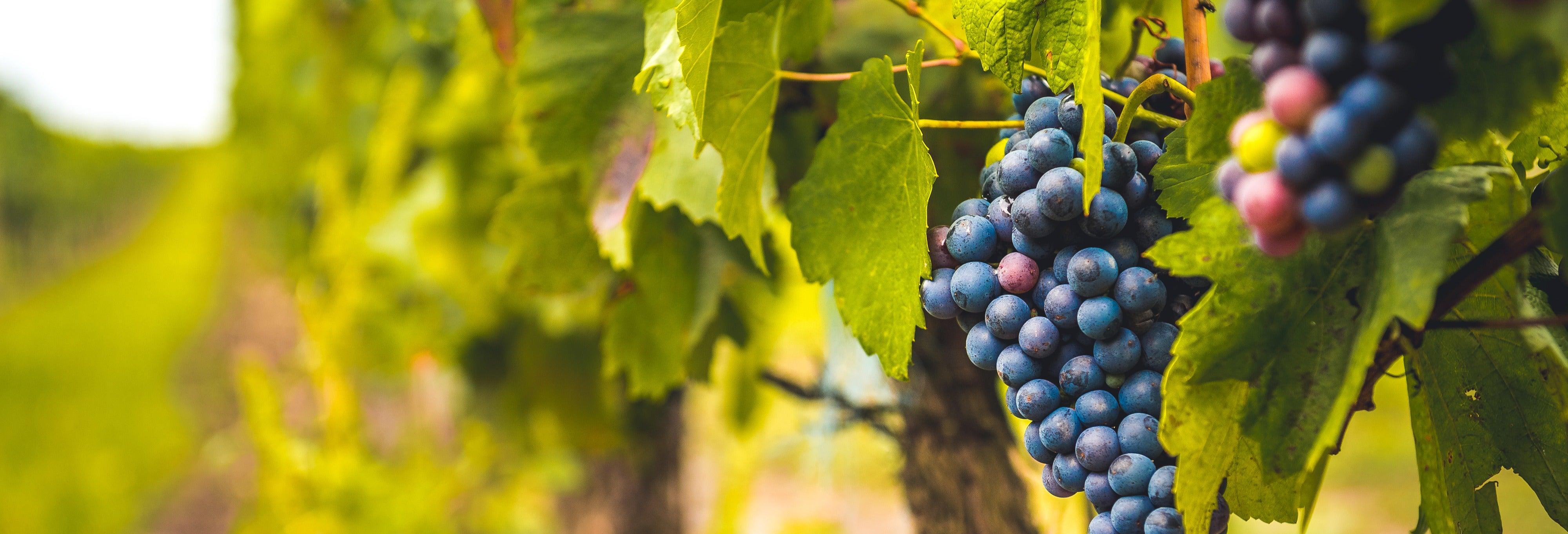 Escursione a Siurana con degustazione di vino
