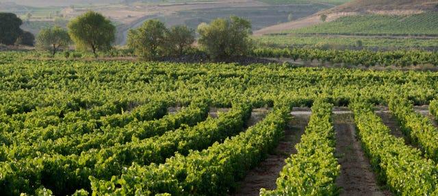 Excursión a Laguardia y a una bodega de la Rioja Alavesa