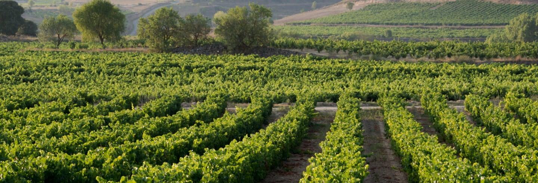 Excursão a Laguardia e a uma adega da Rioja Alavesa