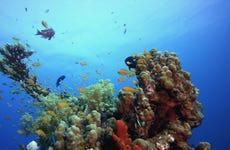 Excursión a Tabarca en barco + Snorkel