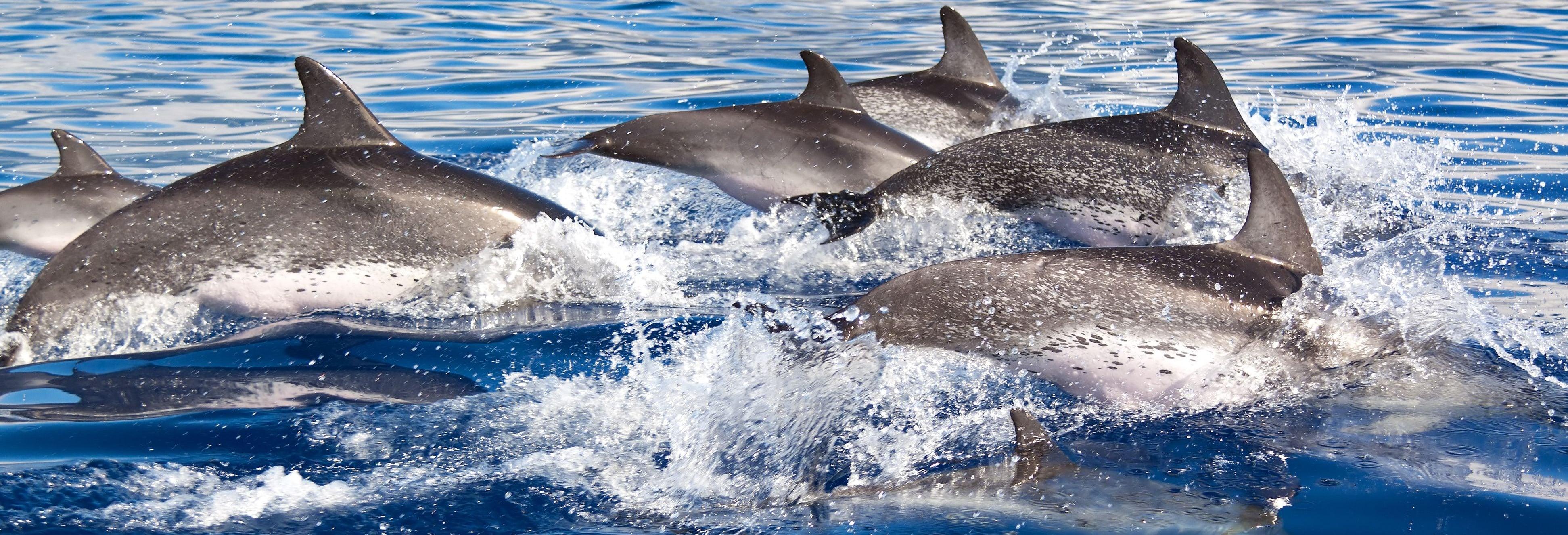 Avistamiento de delfines en el sur de Mallorca