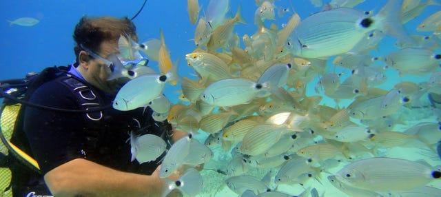 Mallorca Beginner's Diving Lesson
