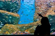 Biglietti per l'Acquario di Siviglia