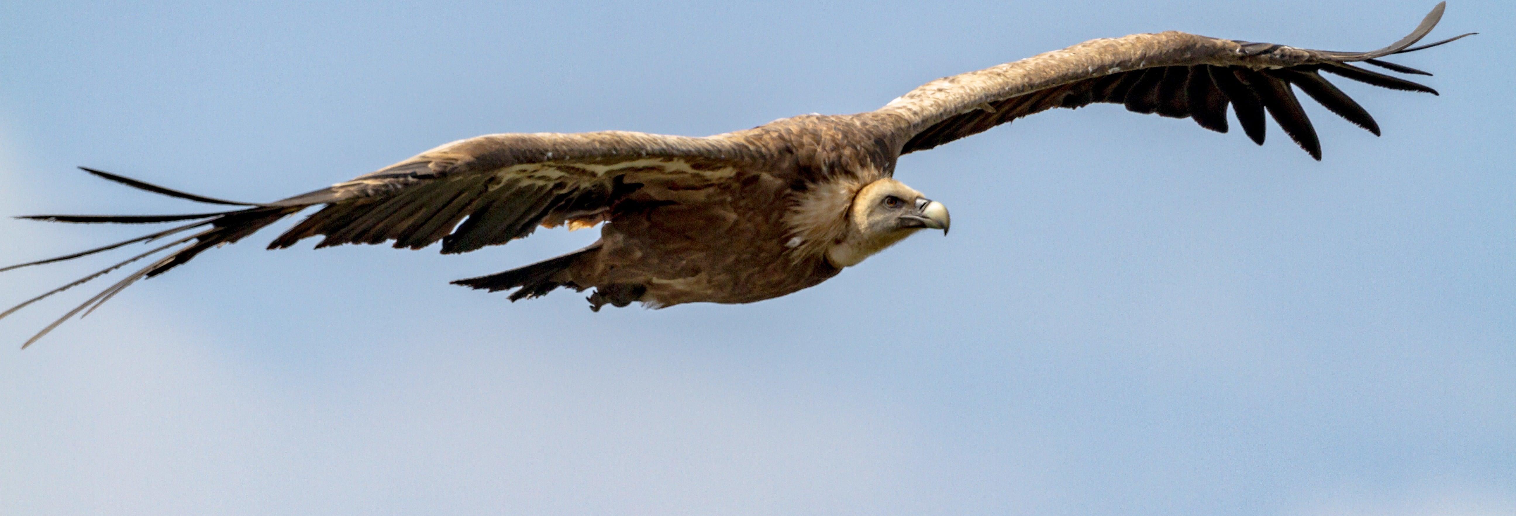 Observação de aves na Sierra de Gata