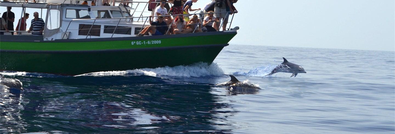 Avistamiento de ballenas y delfines desde Tazacorte
