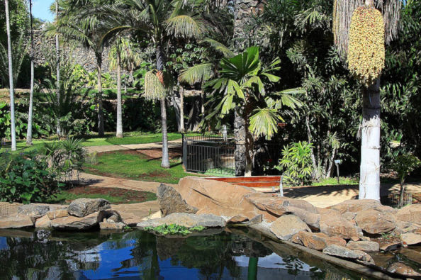 Exploring the gardens of the Palmetum
