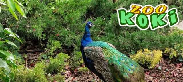 Entrada al Zoo Koki