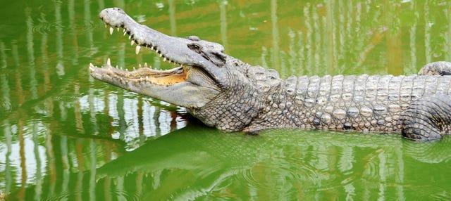 Entrada a Crocodile Park