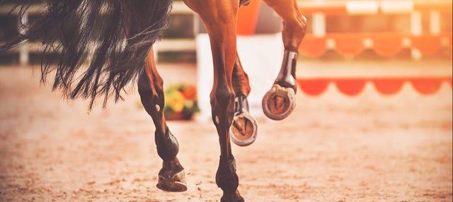 Espectáculo ecuestre en El Ranchito