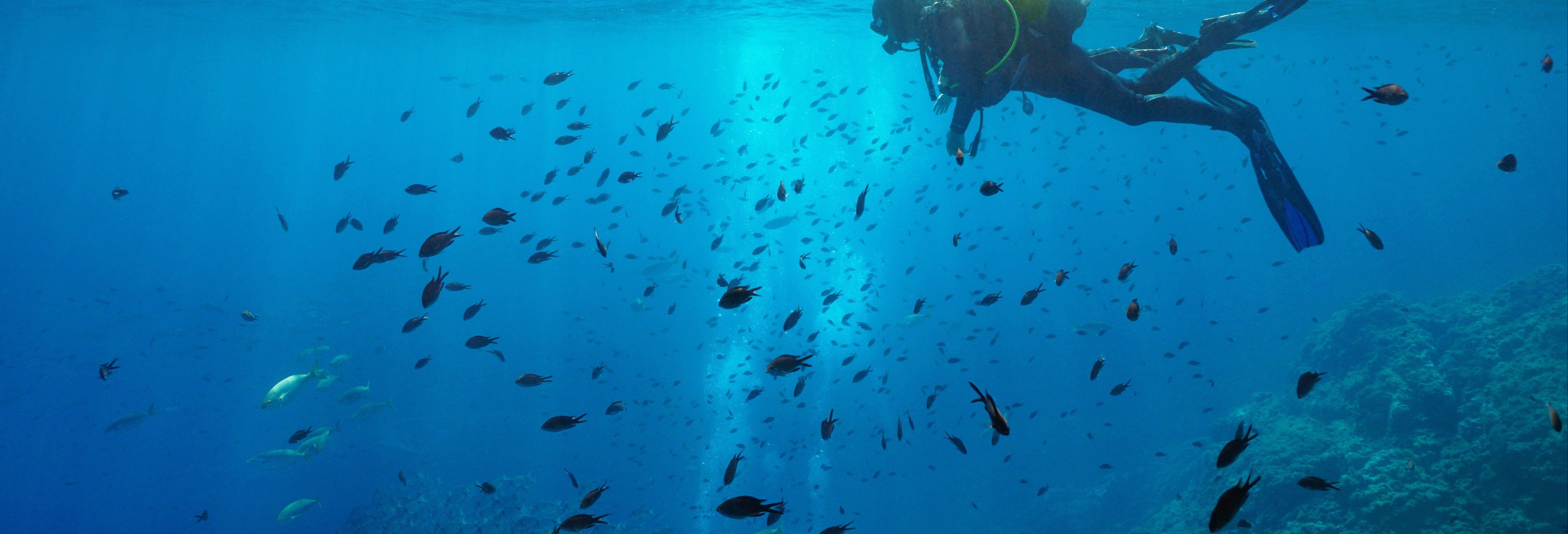 Curso de buceo PADI Open Water