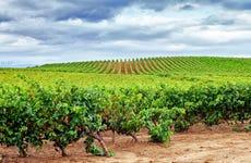 Visita guiada por Valdepeñas + Museo del Vino