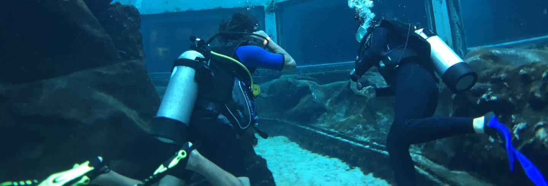 Nado con tiburones en Sea Life Park Hawaii