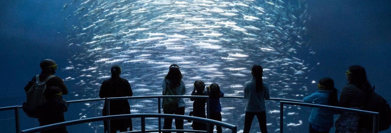 Entrada al Ocean Odyssey