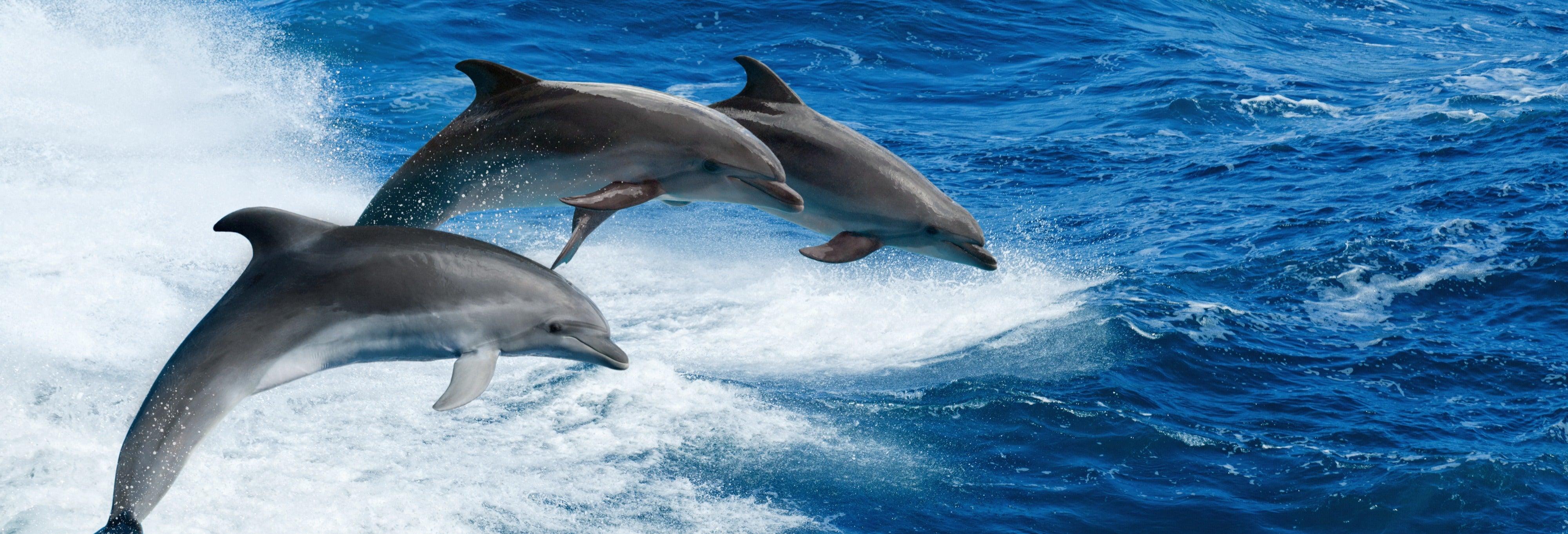 Avistamiento de delfines en Clearwater Beach