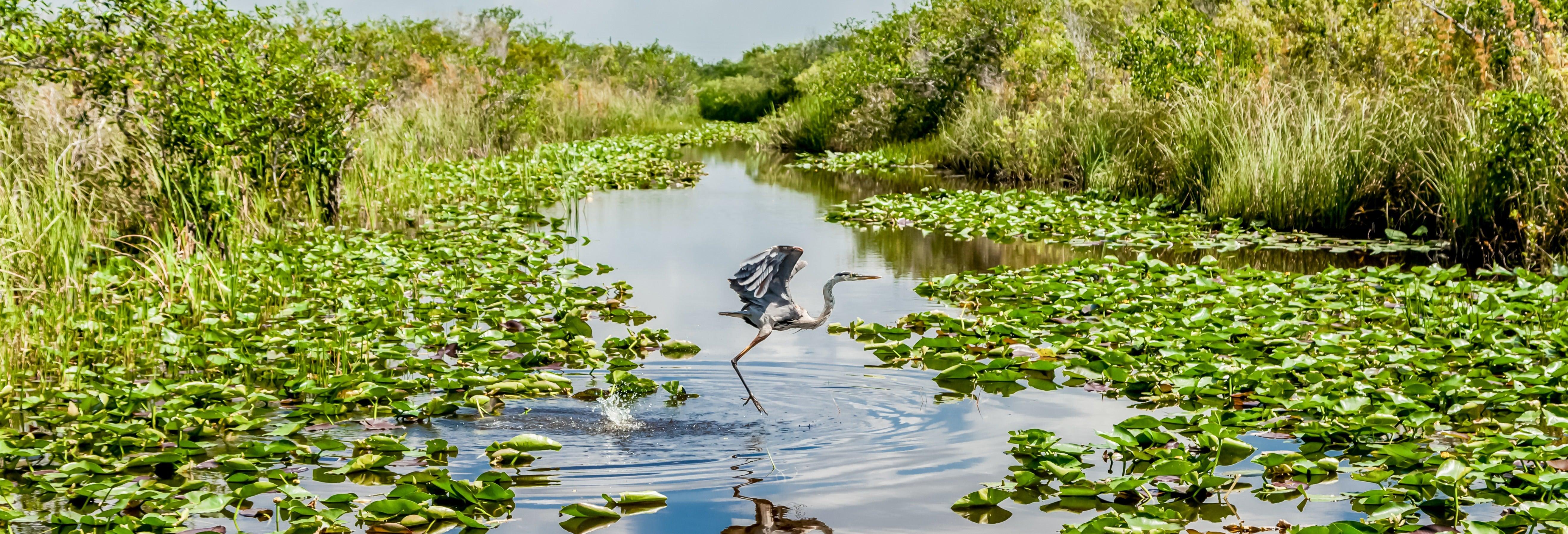 Giro in aeroscafo nelle Everglades