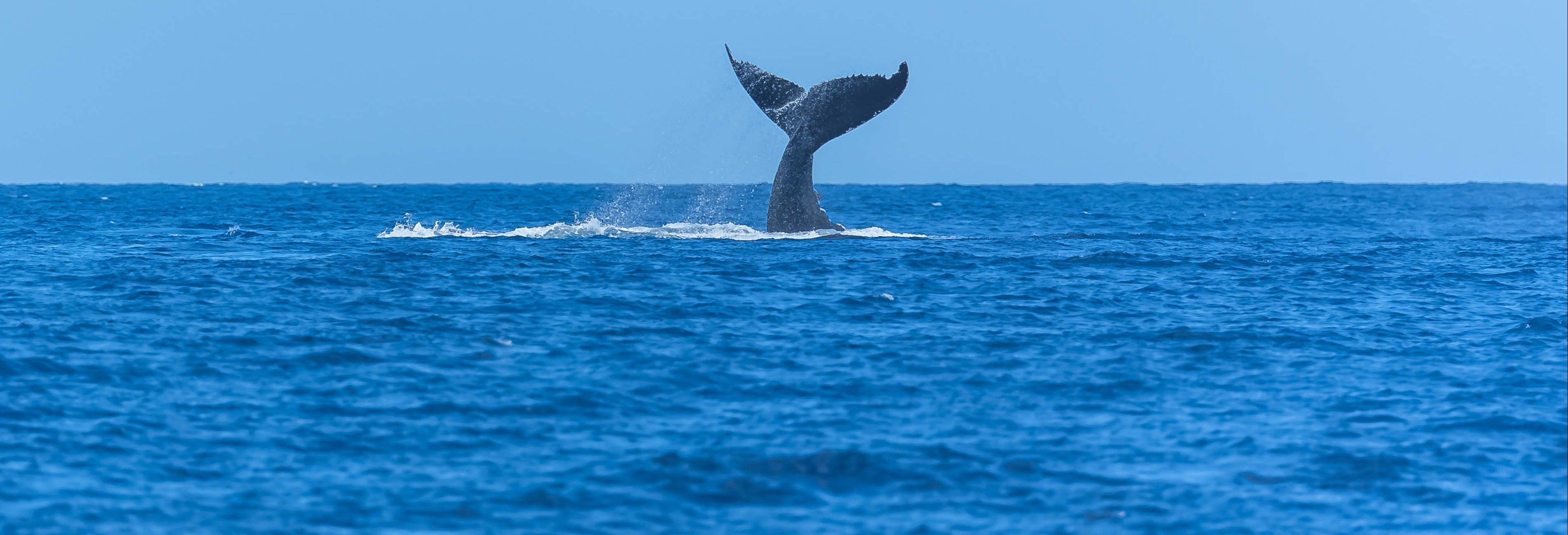 Avistamiento de cetáceos en San Diego