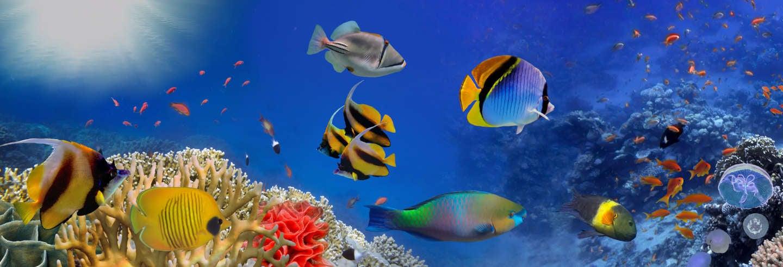 Billet pour LEGOLAND California + SEA LIFE Aquarium