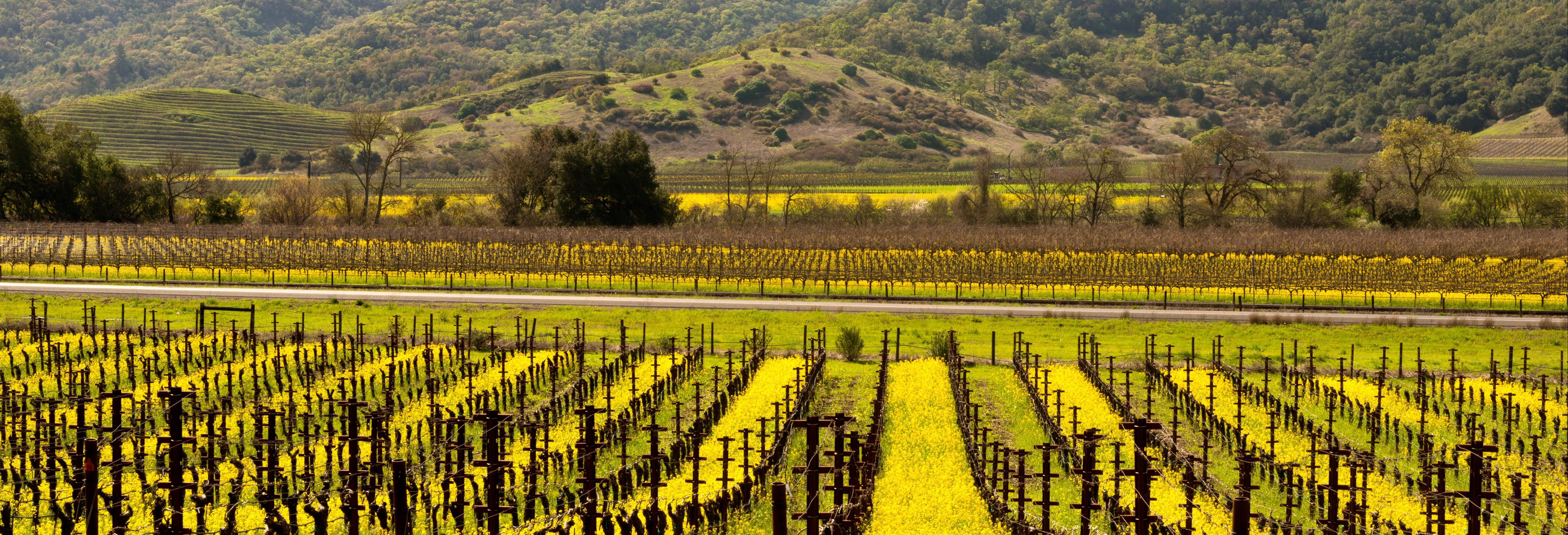 Excursion aux vallées viticoles de Napa et Sonoma