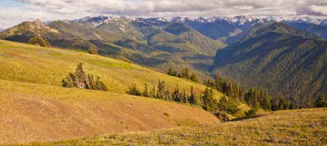 Olympic National Park Tour