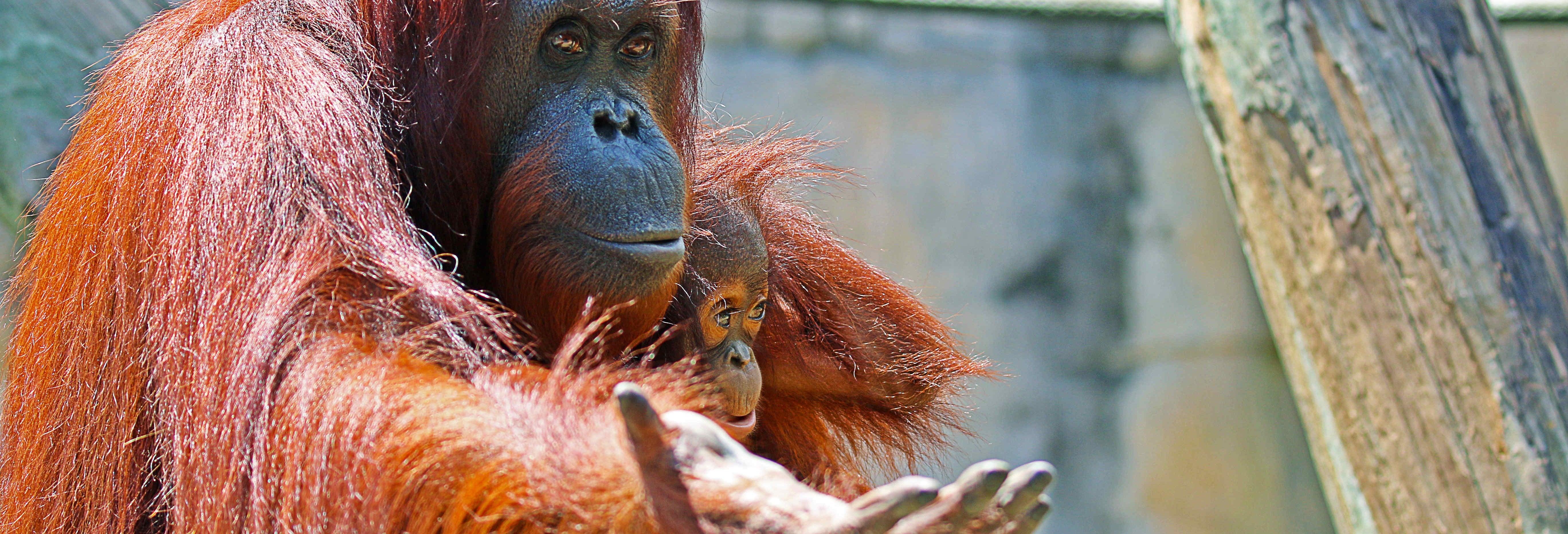 Entrada al Zoo de Tampa + Acuario de Florida