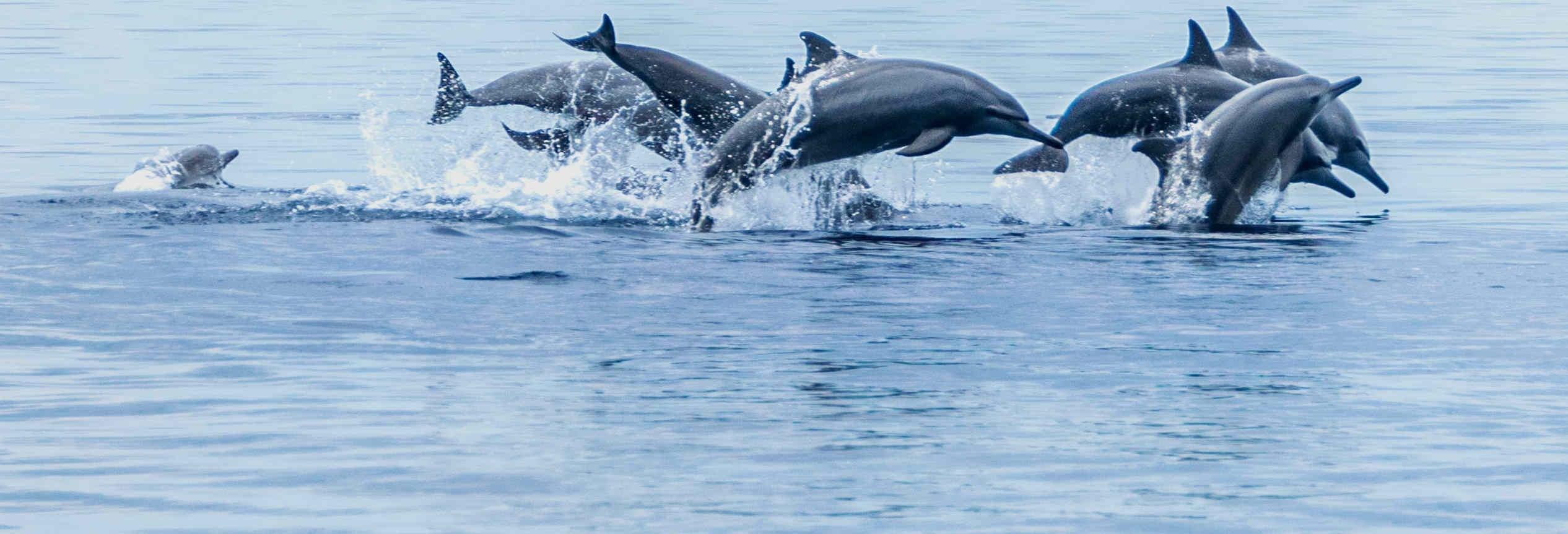 Observation de baleines à Bohol