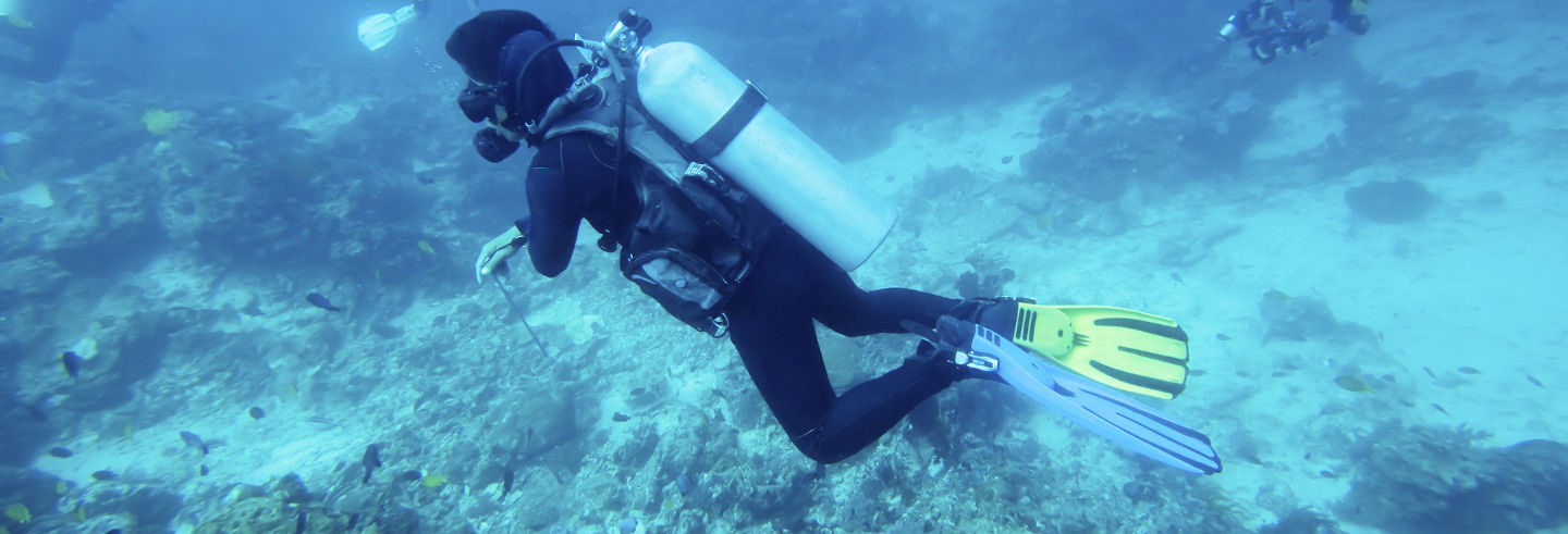 Beginner's Scuba Diving in Bohol