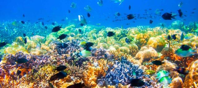 Excursión a los barcos hundidos y el arrecife de coral