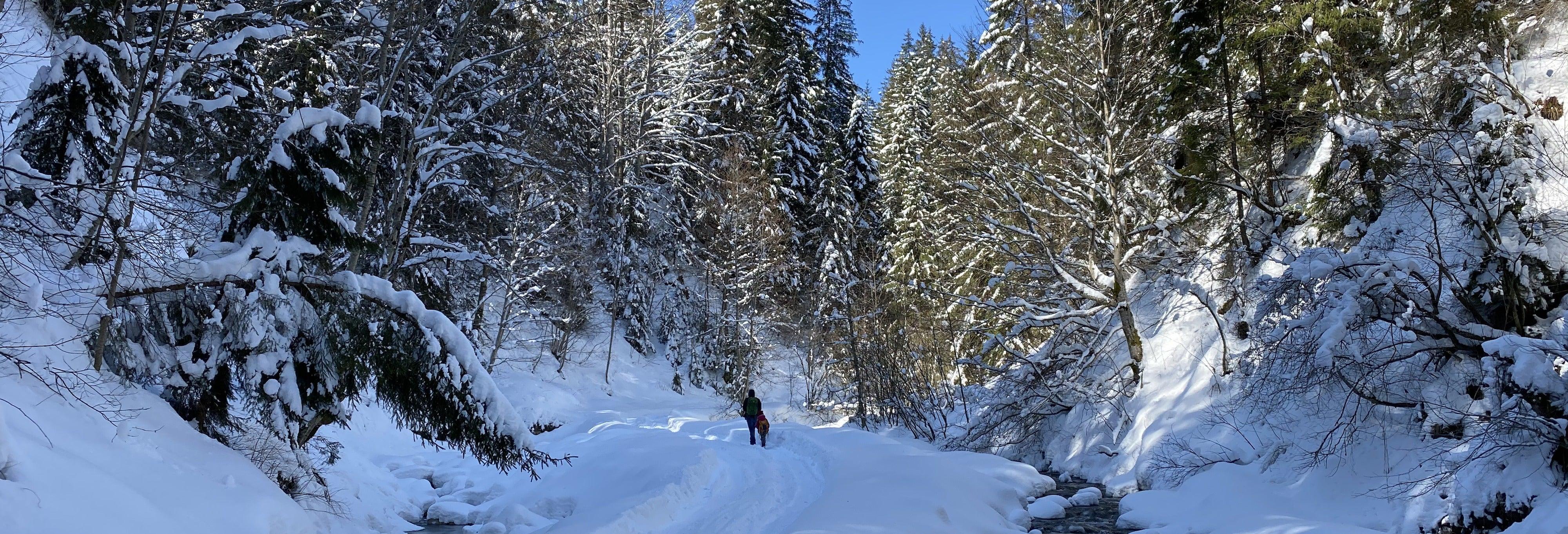 Passeggiata con le racchette da neve al Parco nazionale Pallas-Yllästunturi