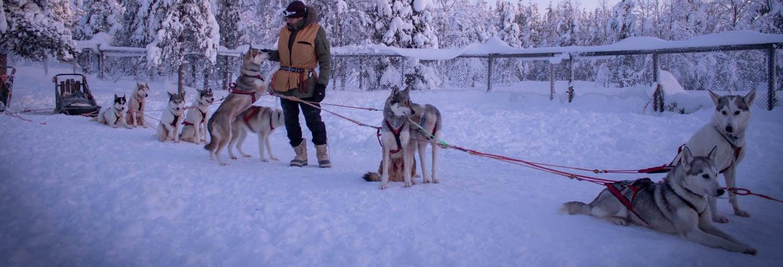 Passeio de trenó de cães husky