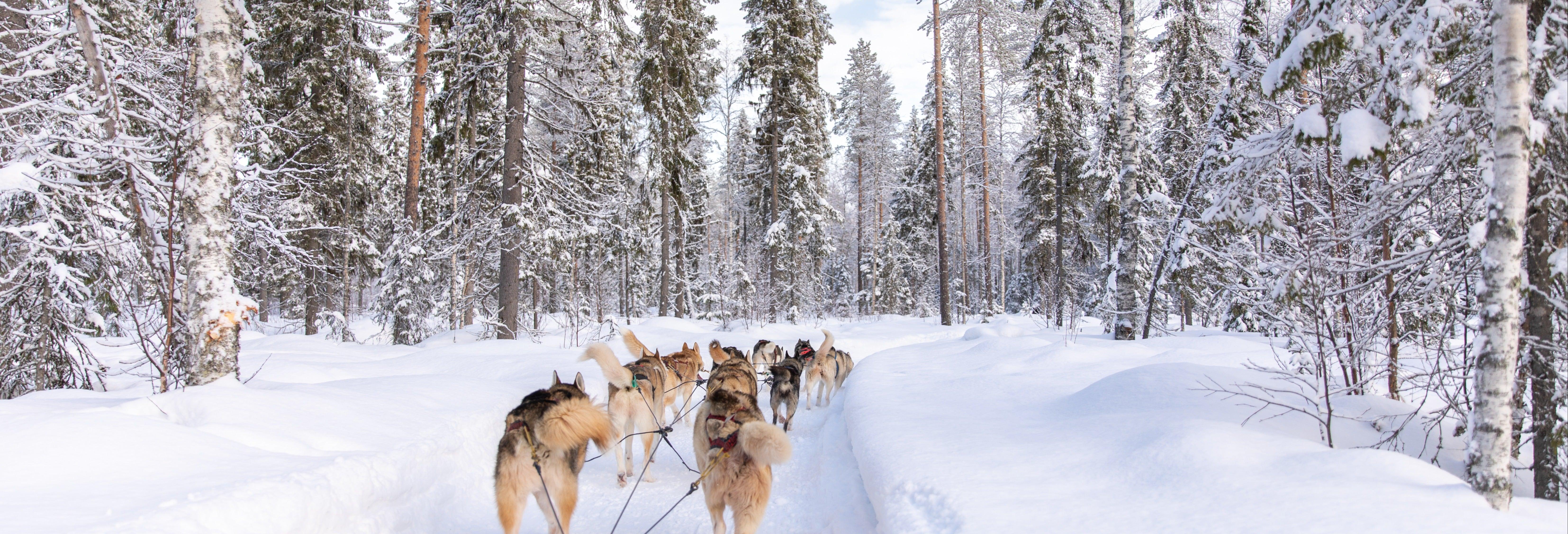 Balade en traîneau tiré par des chiens huskies