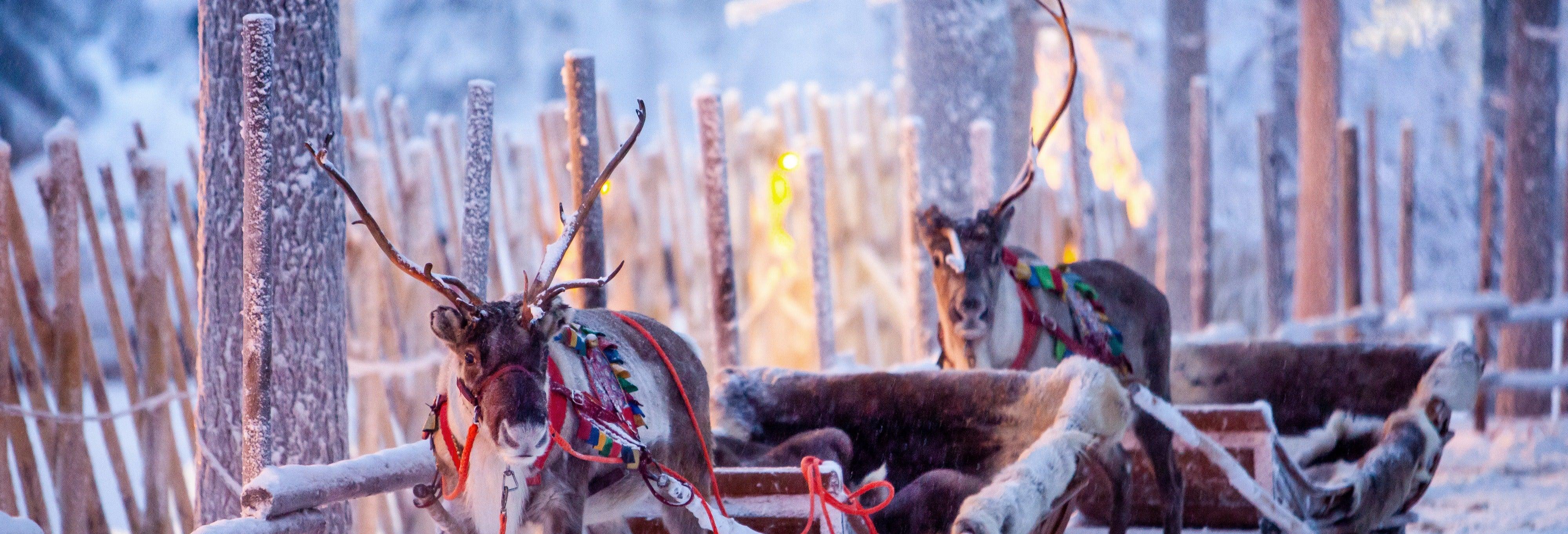 Giro in slitta trainata da renne a Rovaniemi