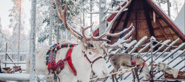 Aldeia do Papai Noel + Passeio de trenó de renas