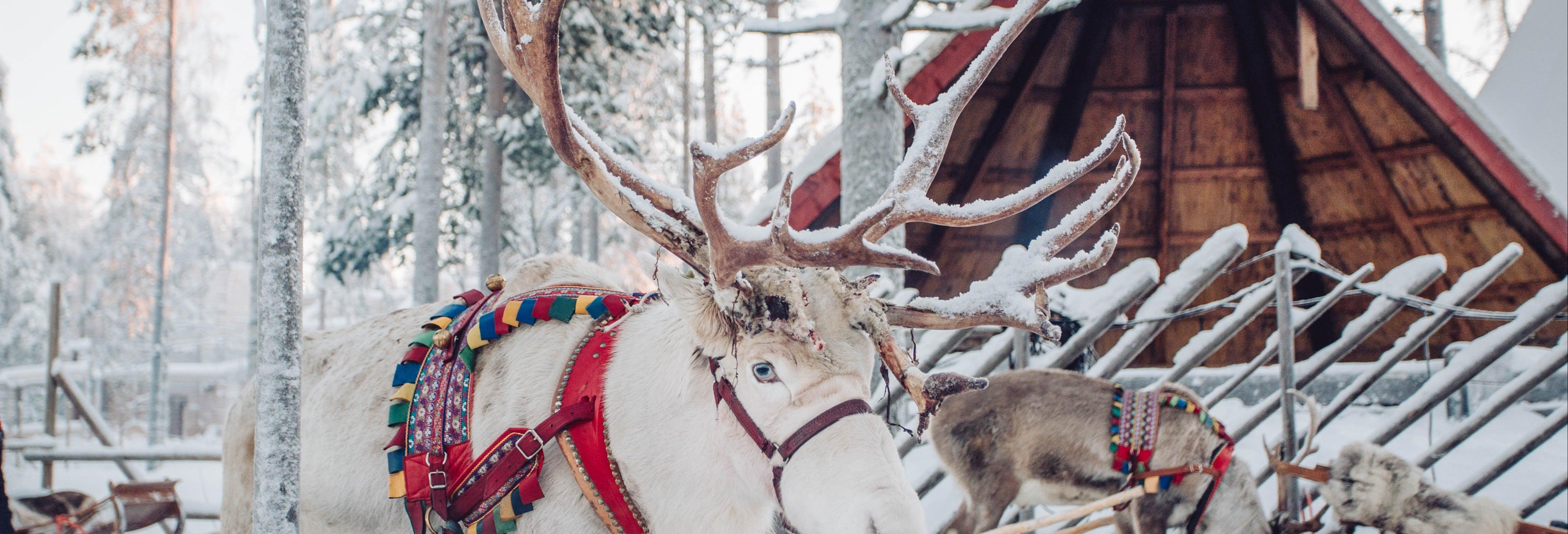 Aldea de Papá Noel + Paseo en trineo de renos