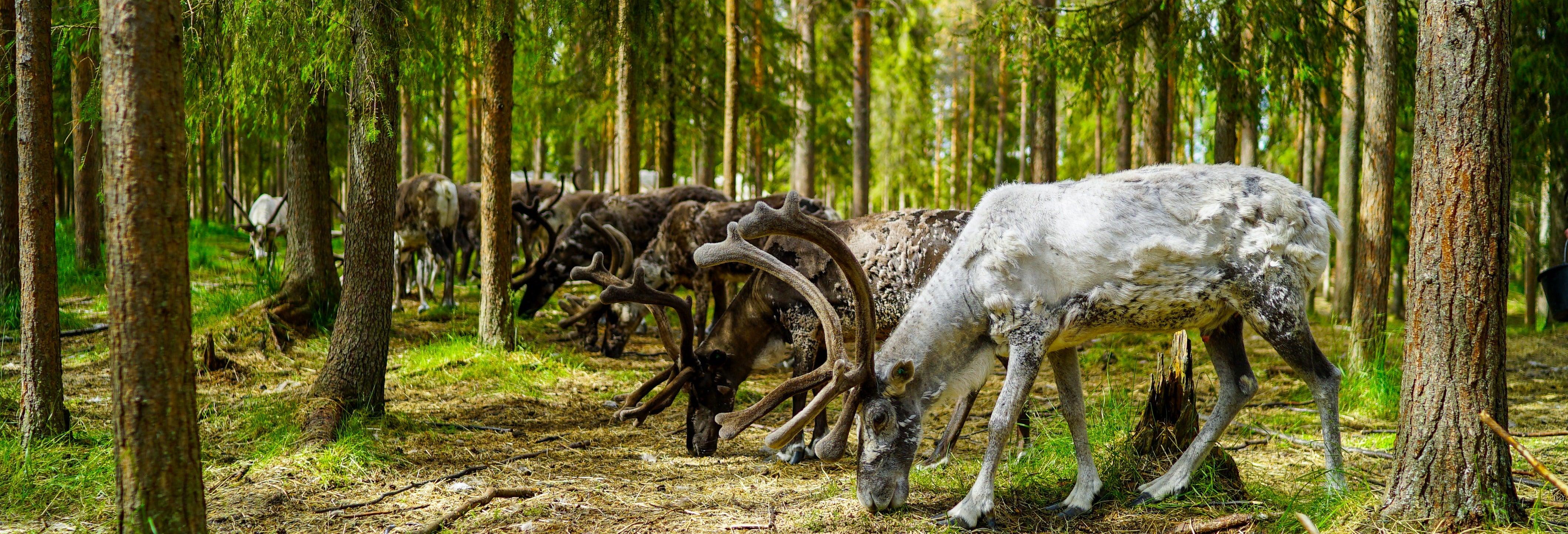 Visita a una granja de renos y paseo en trineo
