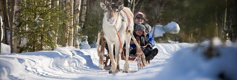 Paseo en trineo de renos
