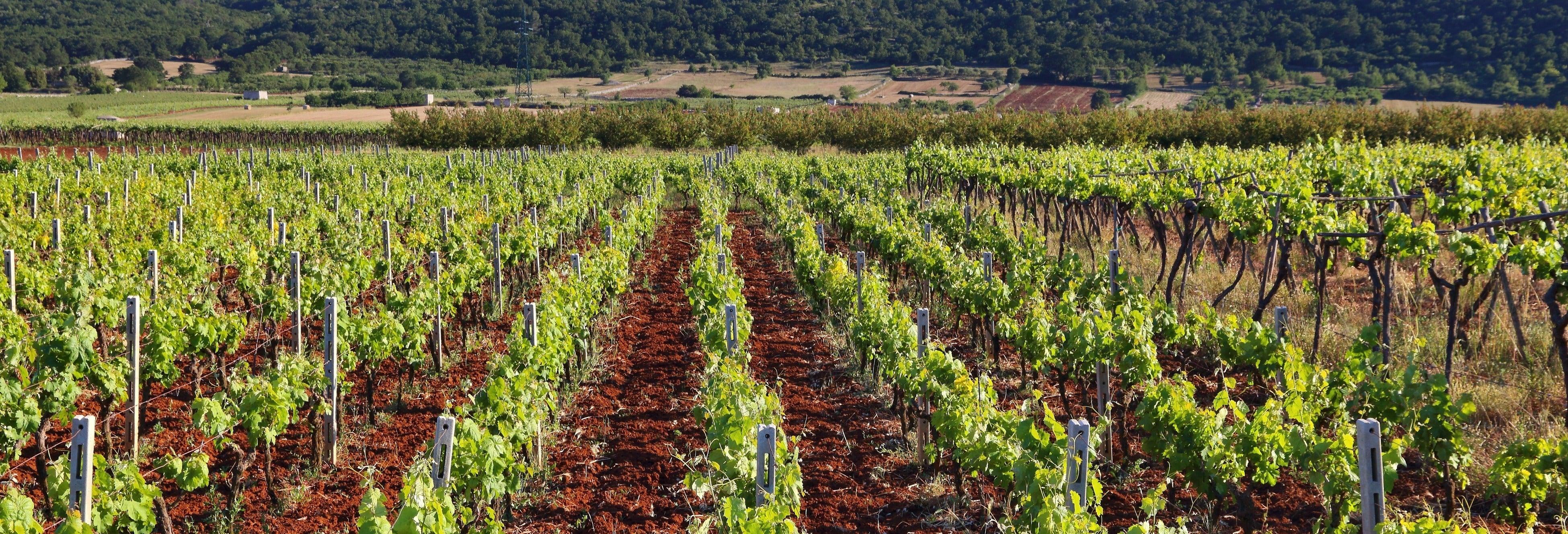 Tour del vino por Mont Sainte-Victoire