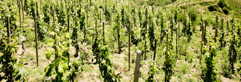 Tour de vinos por el valle del Ródano