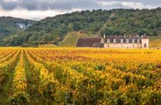 Tour del vino de Borgoña