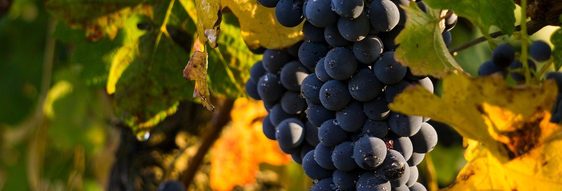 Tour de viñedos y bodegas por la región de Médoc