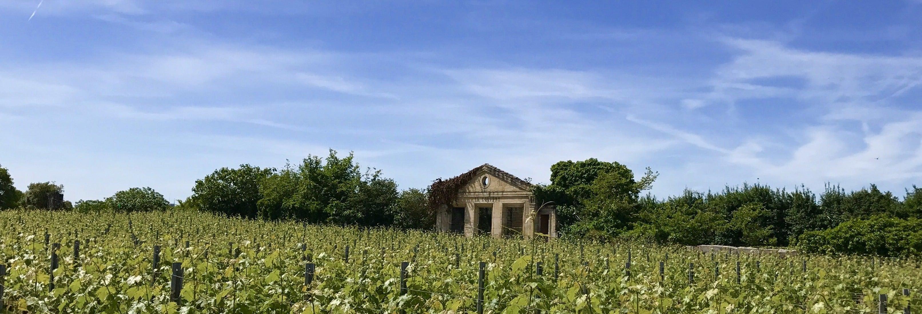 Tour de viñedos y bodegas por Saint-Émilion